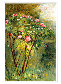 Premium poster  The rose bush - Gustave Caillebotte