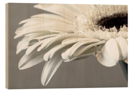 Wood print  White Gerbera with drops - Susanne Herppich