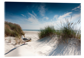 Acrylic glass  Sylt - dune with fine beach grass and seagull - Reiner Würz RWFotoArt