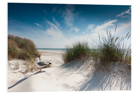 Foam board print  Sylt - dune with fine beach grass and seagull - Reiner Würz