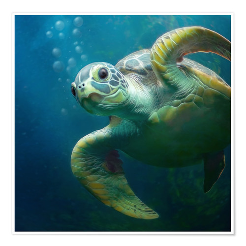 Bubbles The Cute Sea Turtle Posters And Prints Posterlounge Com