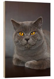 Wood print  British Shorthair 7 - Heidi Bollich