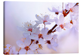 Canvas print  cherry blossoms - Renate Knapp