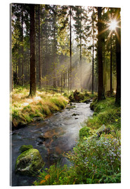Acrylic print  Bode river in Harz, Germany - Dave Derbis