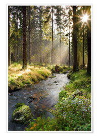 Premium poster  Bode river in Harz, Germany - Dave Derbis