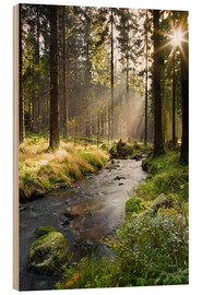 Wood print  Bode river in Harz, Germany - Dave Derbis