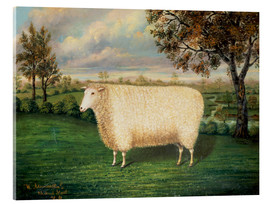 Acrylic glass  A Prize Sheep of the Old Lincoln Breed, 1835 - W. Adamson