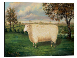 Aluminium print  Award winning sheep from the old Lincoln breed, 1835 - W. Adamson