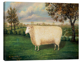 Canvas print  Award winning sheep from the old Lincoln breed, 1835 - W. Adamson
