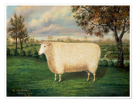 Premium poster  Award winning sheep from the old Lincoln breed, 1835 - W. Adamson