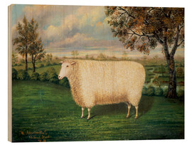 Wood print  Award winning sheep from the old Lincoln breed, 1835 - W. Adamson
