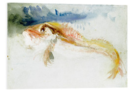 Foam board print  A Gurnard - Joseph Mallord William Turner