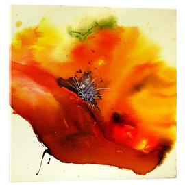 Acrylic print  Poppy - single flower - Brigitte Dürr