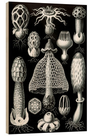 Wood print  Basimycetes, artistic forms of nature, picture 63 - Ernst Haeckel