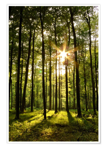 Premium poster Forest in Sunset