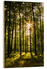 Wood print  Forest in Sunset - Renate Knapp