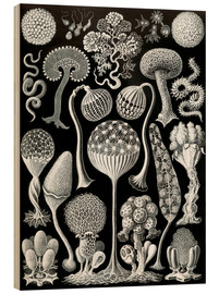 Wood print  Mycetozoa (Forms of Nature: graphic 93) - Ernst Haeckel