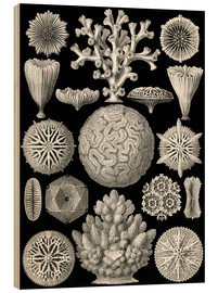 Wood print  Hexacoralla - Ernst Haeckel