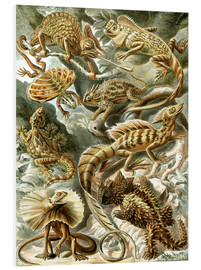 Foam board print  Lacertilia - Ernst Haeckel