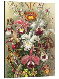 Aluminium print  Orchids, artistic forms of nature, graphic 74 - Ernst Haeckel