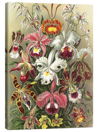Canvas print  Orchids, artistic forms of nature, graphic 74 - Ernst Haeckel
