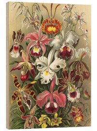 Wood print  Orchids, artistic forms of nature, graphic 74 - Ernst Haeckel