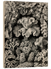 Wood print  Hexacoralla 69 - Ernst Haeckel