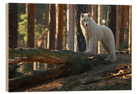 Wood print  Animals Wolf - WildlifePhotography