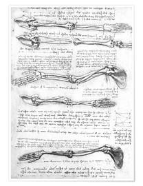 Premium poster  Bones of the arms - Leonardo da Vinci