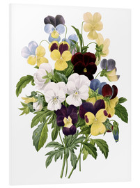 Foam board print  Bouquet of Pansies - Pierre Joseph Redouté