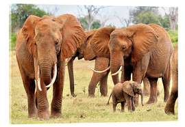 Acrylic print  Playful elephant baby with family - Jürgen Feuerer
