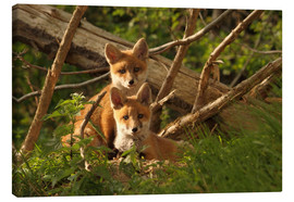 Canvas print  Young foxes - Uwe Fuchs