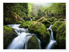 Premium poster  Wild Creek in German Black Forest - Andreas Wonisch