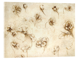 Acrylic print  Study of Flowers of Grass-like plants - Leonardo da Vinci