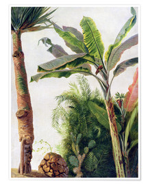 Premium poster  Banana Tree - Frederic Edwin Church