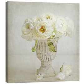 Canvas  white ranunculus - Lizzy Pe