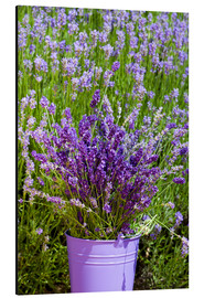 Aluminium print  Lavender in metal bucket - Thomas Klee