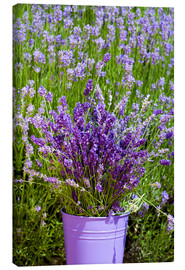 Canvas print  Lavender in metal bucket - Thomas Klee