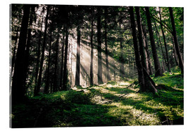 Acrylic print  Light rays in the forest - Oliver Henze