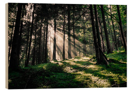 Wood print  Light rays in the forest - Oliver Henze
