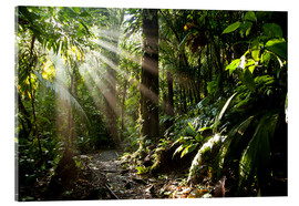 Peter Schickert - jungle light