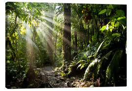 Canvas print  Jungle light - Peter Schickert