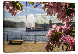 Canvas  Cherry on the Alster in Hamburg for Spring - Dennis Stracke