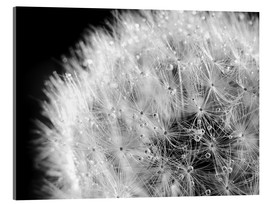 Acrylic glass  Dandelion dew drops black and white - Julia Delgado