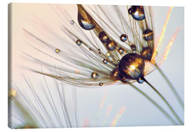 Canvas print  Dandelion gloss - Julia Delgado