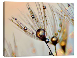 Canvas print  Dandelion dewdrops in the sunlight - Julia Delgado