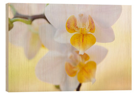 Wood print  White orchids against soft yellow background - Julia Delgado