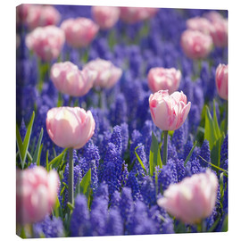 Canvas  meadow of tulips - pixelliebe