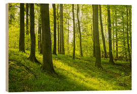 Wood print  Magical beech forest - Oliver Henze