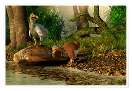 Premium poster A pair of Dodo birds drinking